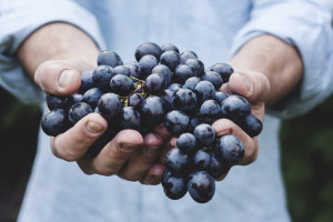 Maja-petric-hands-grapes-farmer-unsplash