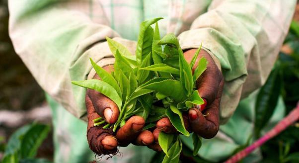 ajurweda zioła